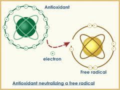 antioxidant and free radical